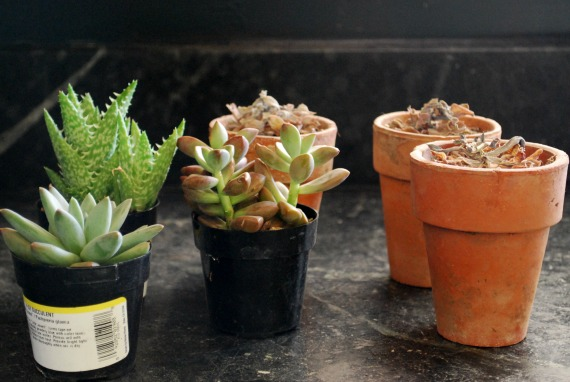 Plants, 1