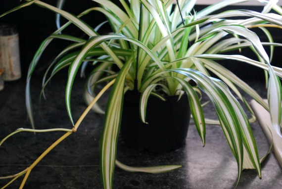 Plants, 3