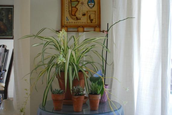 Plants, 4
