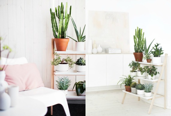 Plants and documentaries for Scalette ikea