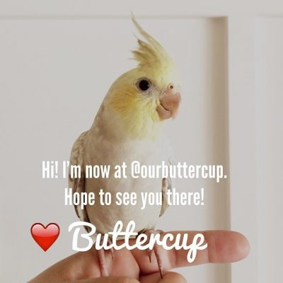 Our Buttercup