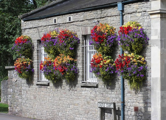 1024px-Hanging_baskets_in_thornbury_arp