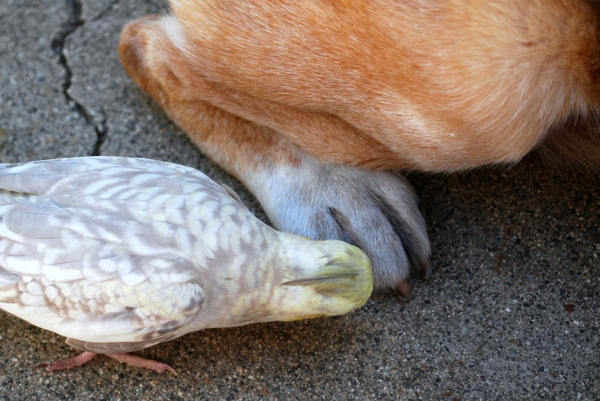 Grooming Toes