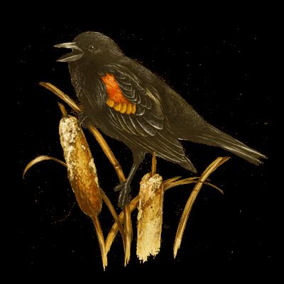 blackbird_400x400
