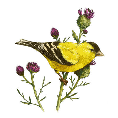 goldfinch_400x400