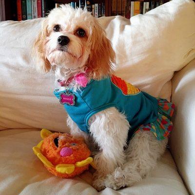 Life is a Dog in a Rainbow Flip Dress