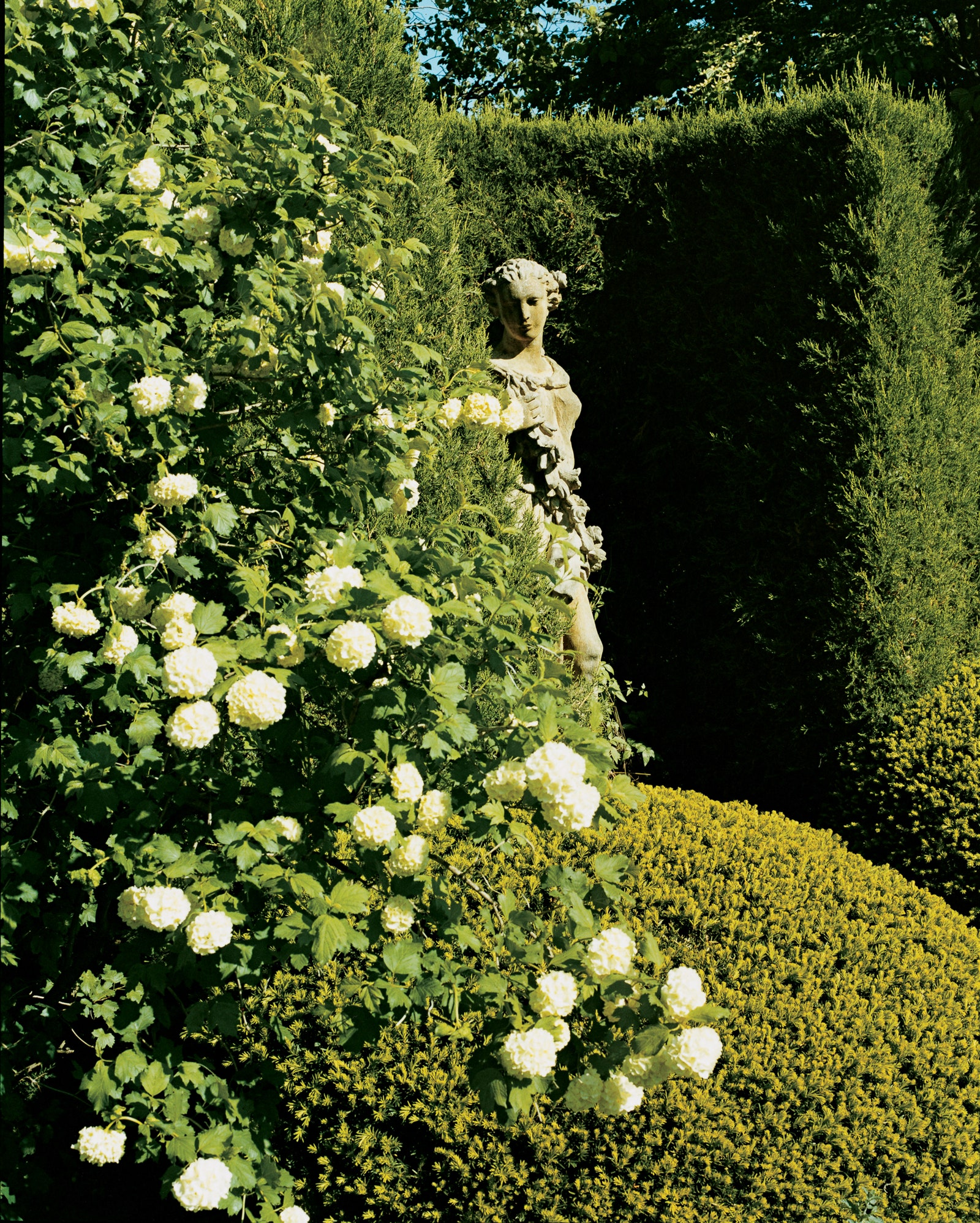 An 18th-century garden statue is partially shaded by white viburnum and yew.
